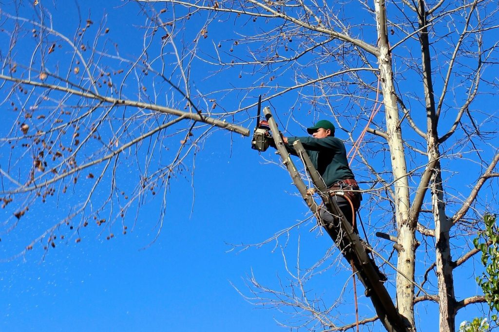 Contact Us-Corpus Christi Tree Trimming and Stump Grinding Services-We Offer Tree Trimming Services, Tree Removal, Tree Pruning, Tree Cutting, Residential and Commercial Tree Trimming Services, Storm Damage, Emergency Tree Removal, Land Clearing, Tree Companies, Tree Care Service, Stump Grinding, and we're the Best Tree Trimming Company Near You Guaranteed!