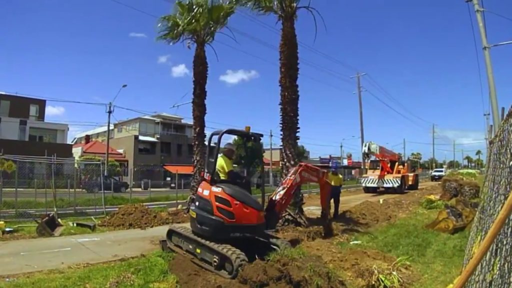 Palm Tree Trimming and Removal-Corpus Christi Tree Trimming and Stump Grinding Services-We Offer Tree Trimming Services, Tree Removal, Tree Pruning, Tree Cutting, Residential and Commercial Tree Trimming Services, Storm Damage, Emergency Tree Removal, Land Clearing, Tree Companies, Tree Care Service, Stump Grinding, and we're the Best Tree Trimming Company Near You Guaranteed!