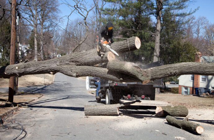 Residential Tree Services-Corpus Christi Tree Trimming and Stump Grinding Services-We Offer Tree Trimming Services, Tree Removal, Tree Pruning, Tree Cutting, Residential and Commercial Tree Trimming Services, Storm Damage, Emergency Tree Removal, Land Clearing, Tree Companies, Tree Care Service, Stump Grinding, and we're the Best Tree Trimming Company Near You Guaranteed!