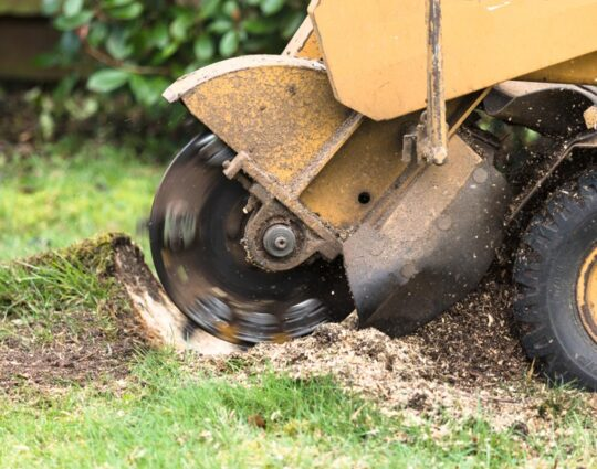 Stump Grinding-Corpus Christi Tree Trimming and Stump Grinding Services-We Offer Tree Trimming Services, Tree Removal, Tree Pruning, Tree Cutting, Residential and Commercial Tree Trimming Services, Storm Damage, Emergency Tree Removal, Land Clearing, Tree Companies, Tree Care Service, Stump Grinding, and we're the Best Tree Trimming Company Near You Guaranteed!