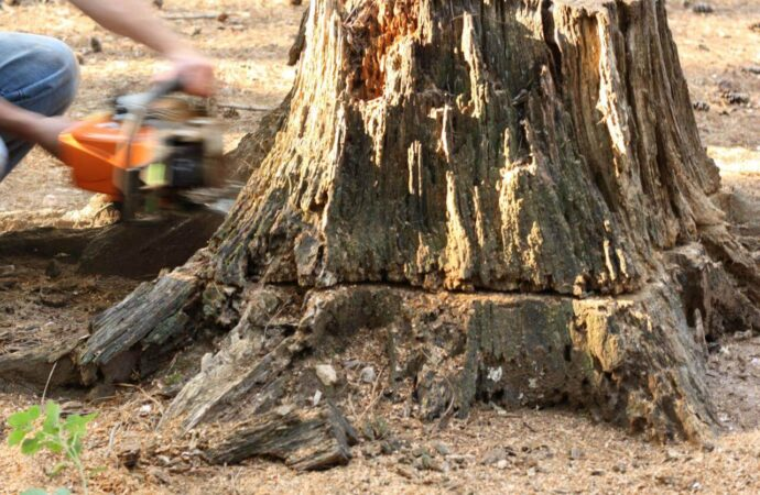 Stump Removal-Corpus Christi Tree Trimming and Stump Grinding Services-We Offer Tree Trimming Services, Tree Removal, Tree Pruning, Tree Cutting, Residential and Commercial Tree Trimming Services, Storm Damage, Emergency Tree Removal, Land Clearing, Tree Companies, Tree Care Service, Stump Grinding, and we're the Best Tree Trimming Company Near You Guaranteed!