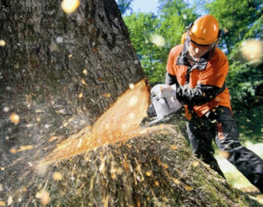 Tree Cutting-Corpus Christi Tree Trimming and Stump Grinding Services-We Offer Tree Trimming Services, Tree Removal, Tree Pruning, Tree Cutting, Residential and Commercial Tree Trimming Services, Storm Damage, Emergency Tree Removal, Land Clearing, Tree Companies, Tree Care Service, Stump Grinding, and we're the Best Tree Trimming Company Near You Guaranteed!