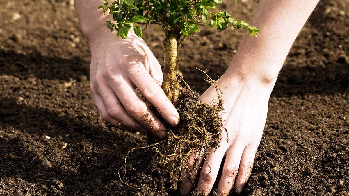 Tree Planting-Corpus Christi Tree Trimming and Stump Grinding Services-We Offer Tree Trimming Services, Tree Removal, Tree Pruning, Tree Cutting, Residential and Commercial Tree Trimming Services, Storm Damage, Emergency Tree Removal, Land Clearing, Tree Companies, Tree Care Service, Stump Grinding, and we're the Best Tree Trimming Company Near You Guaranteed!