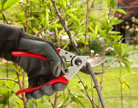 Tree Pruning-Corpus Christi Tree Trimming and Stump Grinding Services-We Offer Tree Trimming Services, Tree Removal, Tree Pruning, Tree Cutting, Residential and Commercial Tree Trimming Services, Storm Damage, Emergency Tree Removal, Land Clearing, Tree Companies, Tree Care Service, Stump Grinding, and we're the Best Tree Trimming Company Near You Guaranteed!