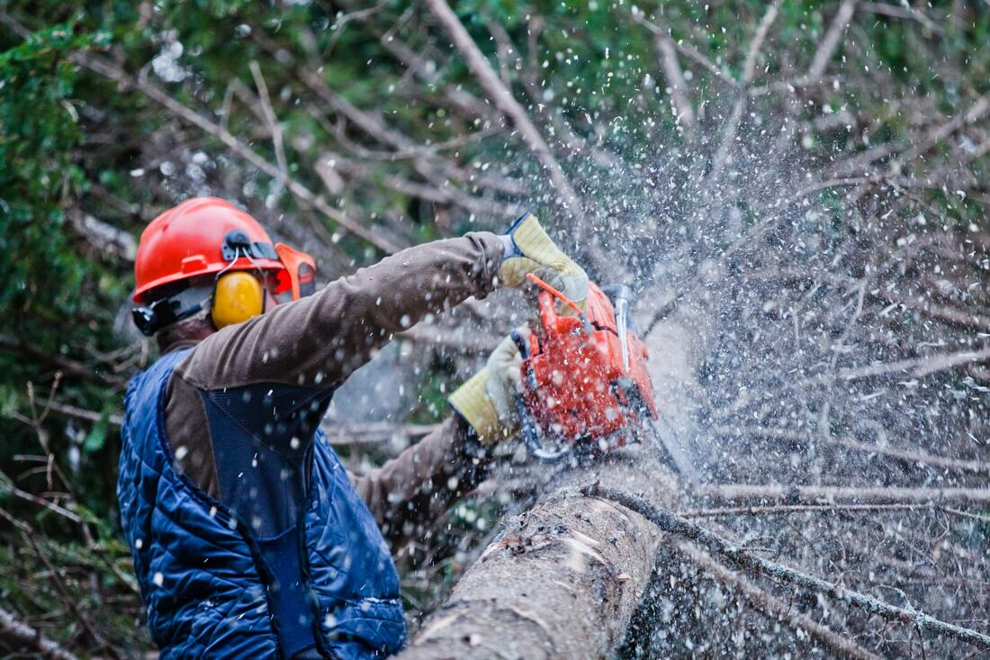 Odem-Corpus Christi Tree Trimming and Stump Grinding Services-We Offer Tree Trimming Services, Tree Removal, Tree Pruning, Tree Cutting, Residential and Commercial Tree Trimming Services, Storm Damage, Emergency Tree Removal, Land Clearing, Tree Companies, Tree Care Service, Stump Grinding, and we're the Best Tree Trimming Company Near You Guaranteed!