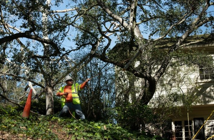 Robstown-Corpus Christi Tree Trimming and Stump Grinding Services-We Offer Tree Trimming Services, Tree Removal, Tree Pruning, Tree Cutting, Residential and Commercial Tree Trimming Services, Storm Damage, Emergency Tree Removal, Land Clearing, Tree Companies, Tree Care Service, Stump Grinding, and we're the Best Tree Trimming Company Near You Guaranteed!